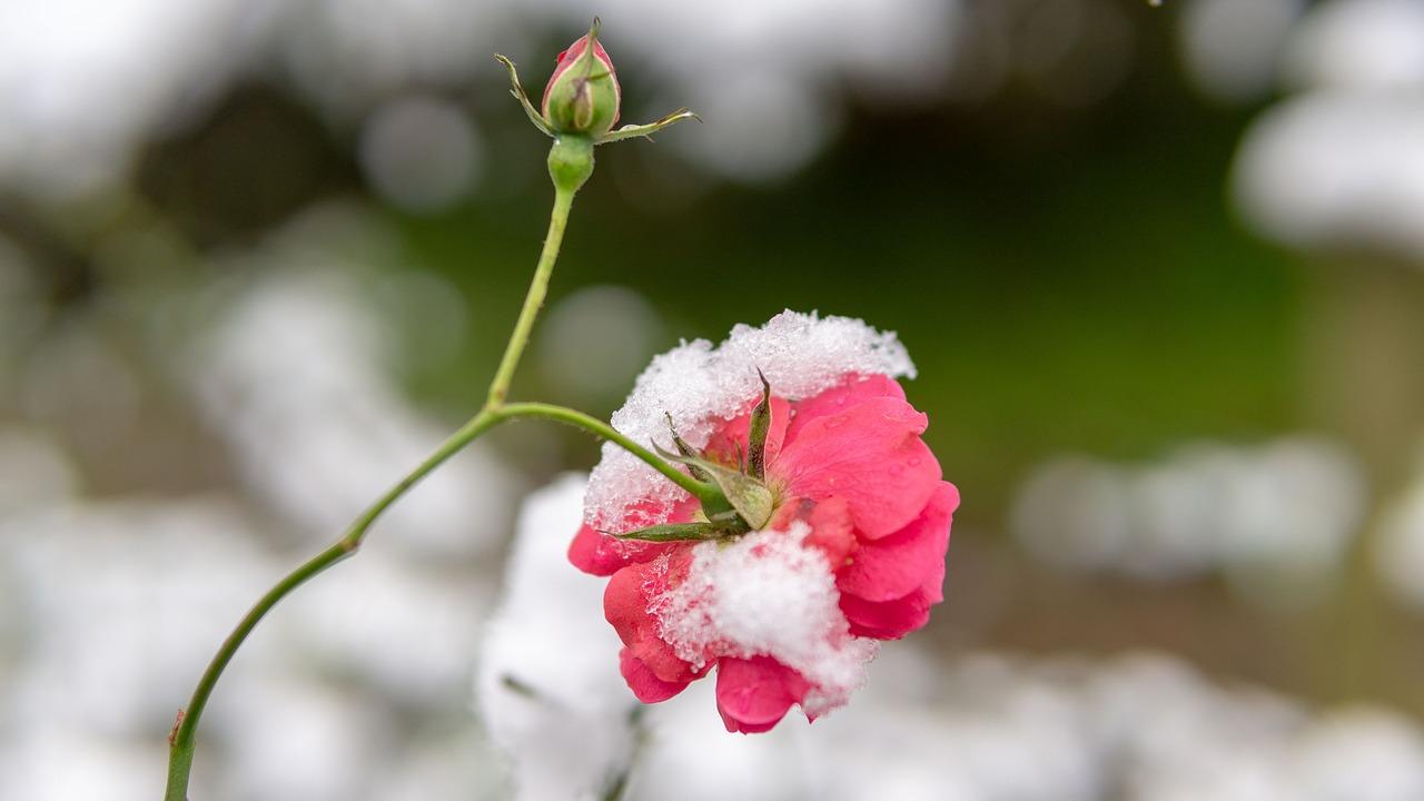 Kraina lodu, czyli jak dbać o ogród zimą