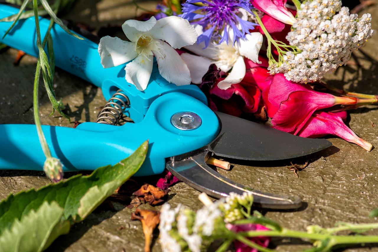Nożyce ogrodowe - ręczne, elektryczne czy spalinowe?