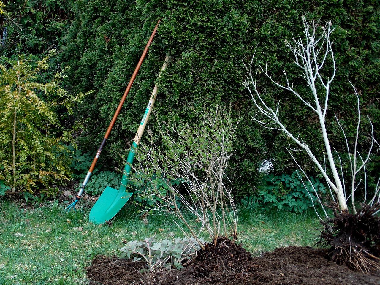 drzewka ogrodowe